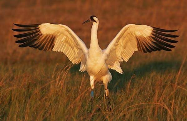 Cause of the Mondays - Whooping Crane Festival @ Vines & Rushes Winery |  |  |