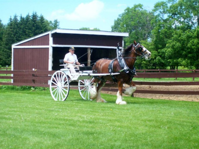 larsons-clydesdales